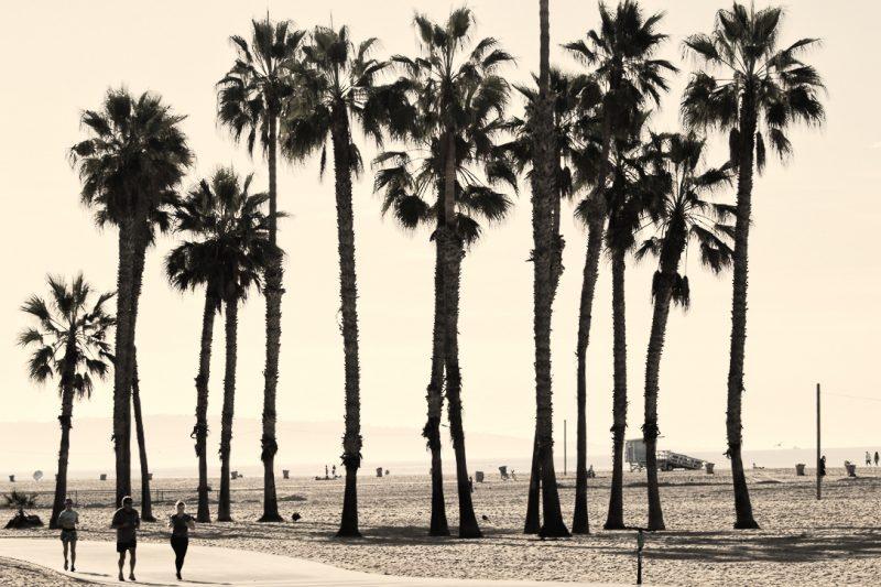 LA Stripes