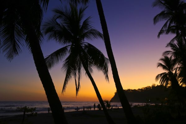 Coconut Trees and Beach Breaks